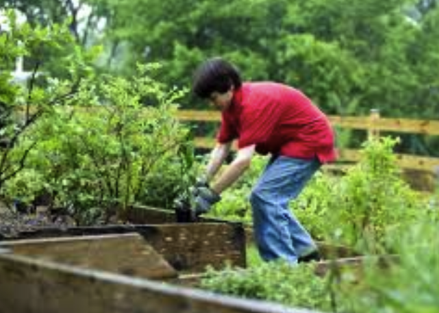 birmingham alabama tree and shrub care program