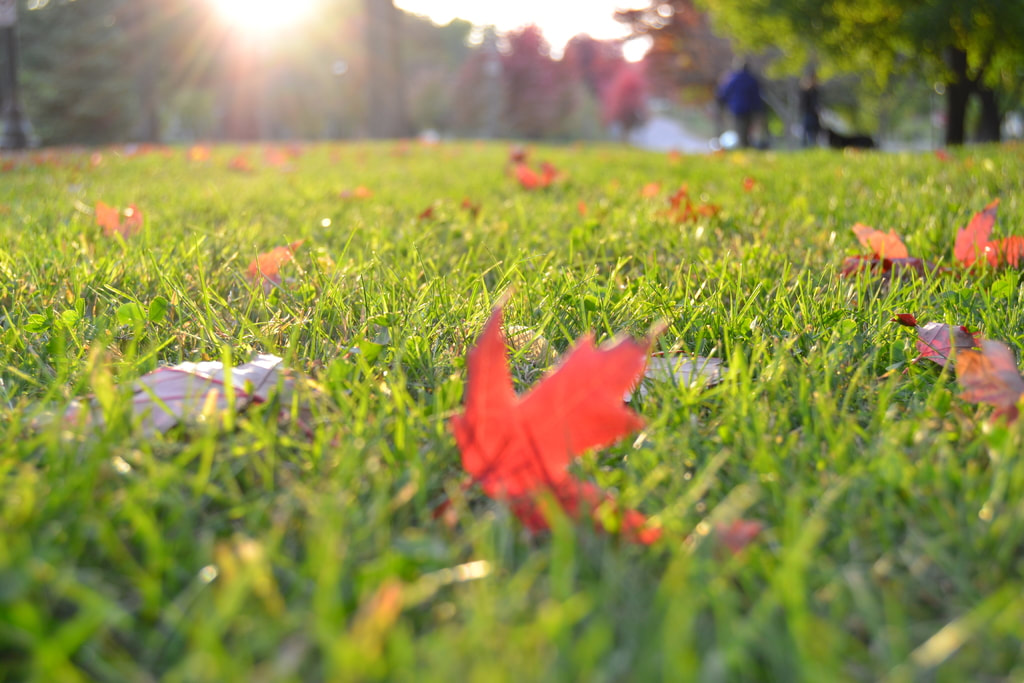 fall lawn care advice