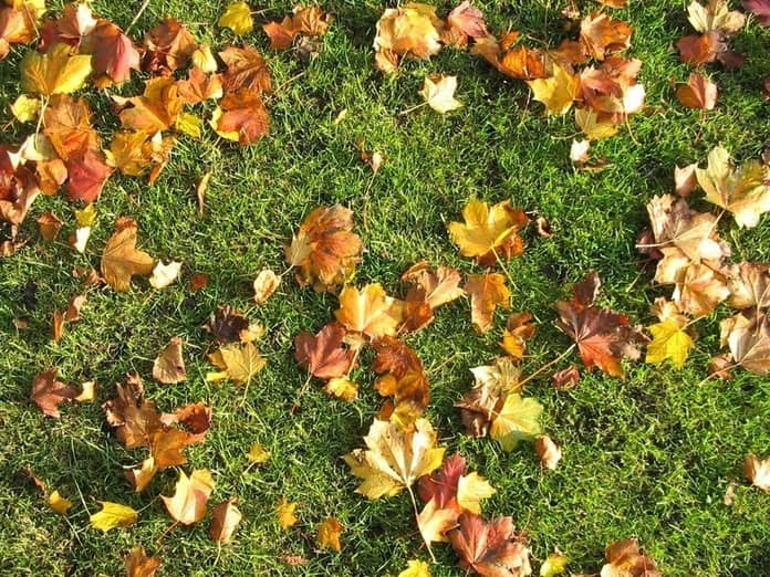 how to care for my lawn in the fall