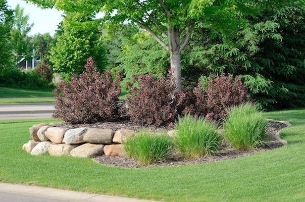 tree-and-shrub-care-birmingham-alabama